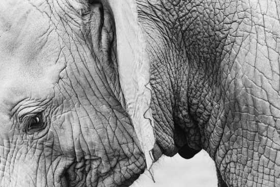 Бесплатные фотостоки - пример фото слона с фотостока Jay Mantri