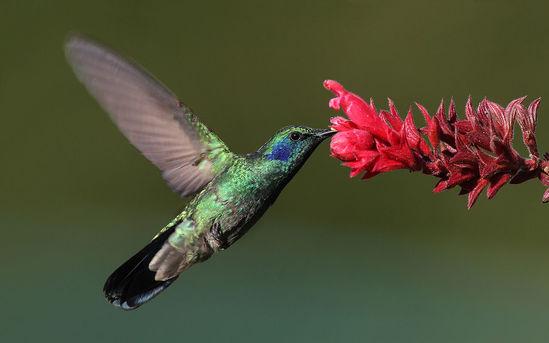 Алгоритм Google Hummingbird - один из способов улучшить seo продвижение сайта