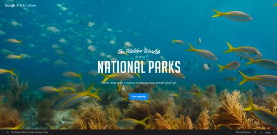 Пример использования фонового видео на сайте (веб-дизайн 2020)