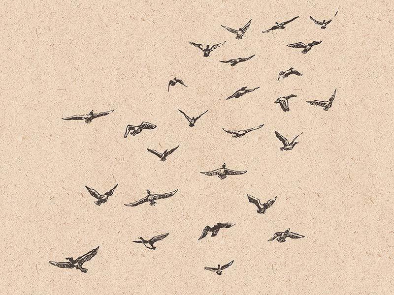 Клипарты стаи птиц бесплатно