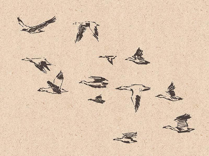 Стая птиц клипарт