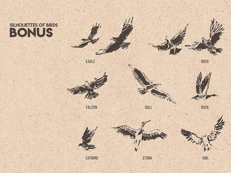 Клипарты птицы бесплатно
