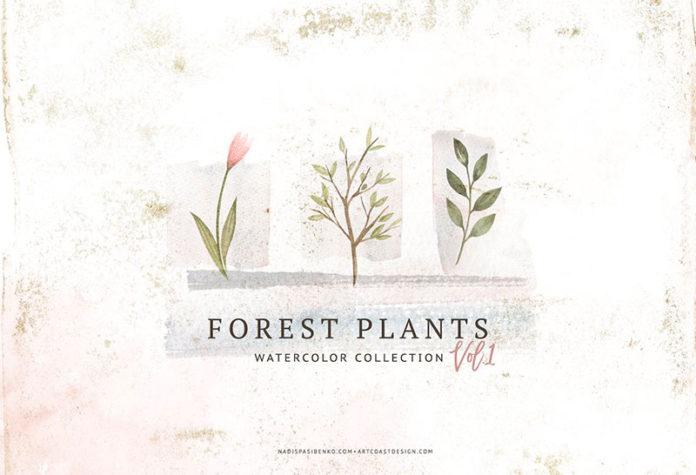 Клипарты лесные растения бесплатно